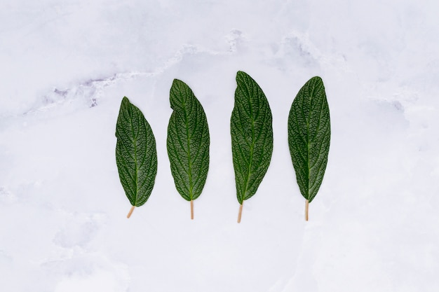 Parallel leaves on marble background