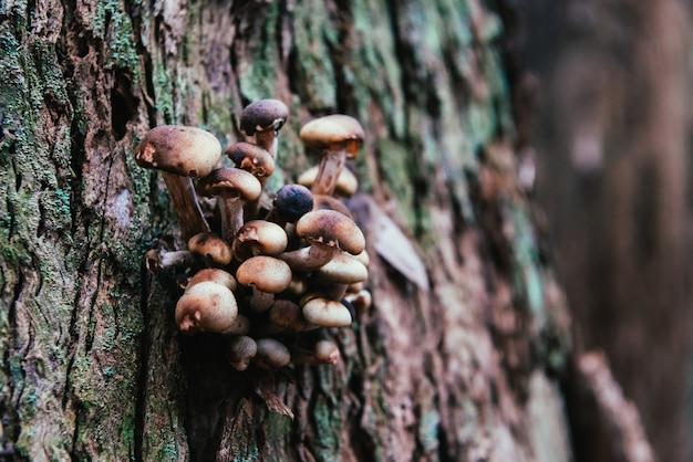 幹の寄生菌