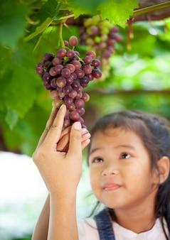 親子の手をチェックして、ぶどう畑で赤いぶどうの木を収穫する