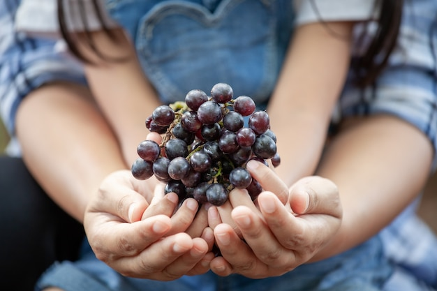 Parent and child holding bunch of red grapes harvested by themselve together in the vineyard