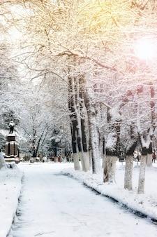 공원 골목 나무 길 겨울