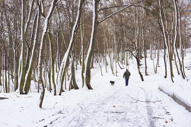 公園と雪。