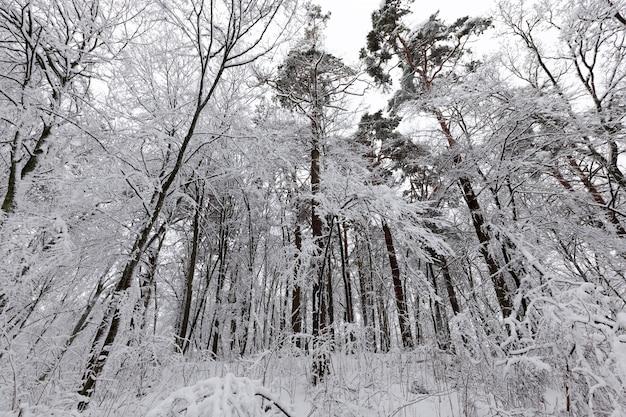 Парк зимой покрыт снегом