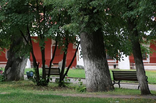 공원 벤치 나무