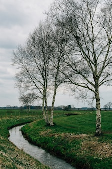 Parco coperto di vegetazione sotto un cielo nuvoloso a teufelsmoor, osterholz-scharmbeck