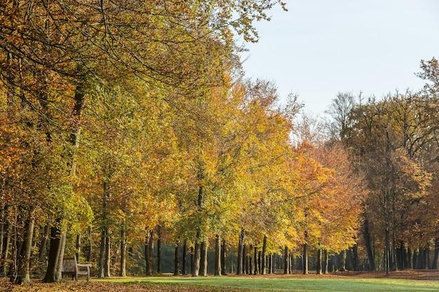 木々と明るい空に満ちた公園