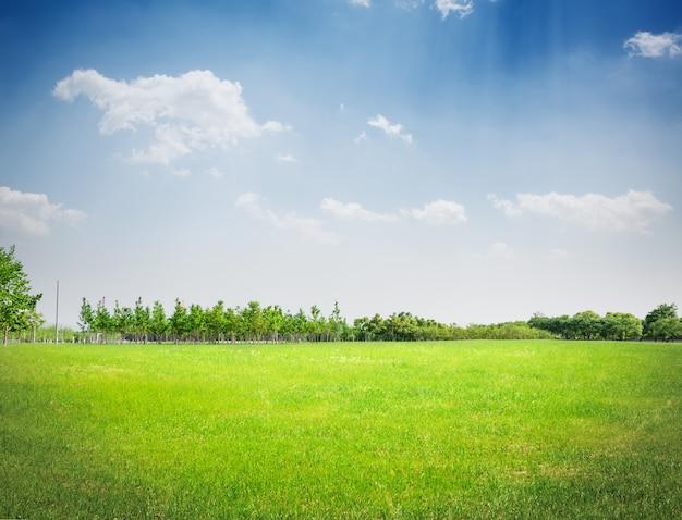 공원 잔디