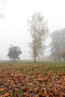 작은 안개 속에서 가을 시즌에 공원. 단풍 나무의 잎이 땅에 떨어지고 식물의 어두운 줄기가 떨어졌습니다. 사진은 근접 촬영, 작은 피사계 심도 및 안개로 인해 가시성이 떨어졌습니다.