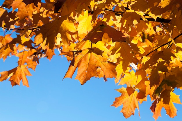 Парк осенью - деревья, растущие в парке в осенний сезон, крупный план, меняющая листва