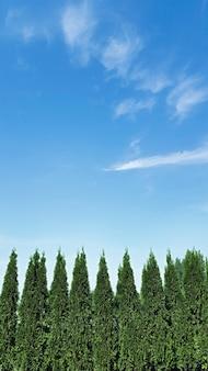복사 공간이 있는 공원 조경 디자인 배경, thuja 나무와 하늘이 있는 뒤뜰. 수직의