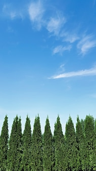 Park landscape design background with copy space, backyard with thuja trees and sky. vertical