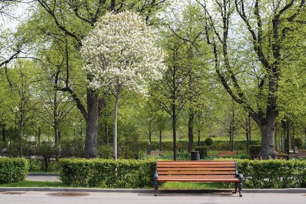 공원 풍경, 전면입니다. 나무 벤치, 꽃이 만발한 나무 및 장식용 녹색 덤불. 화창한 따뜻한 날에 도시 정원에 있는 나무에 흰 꽃. 자연 고요한 장면