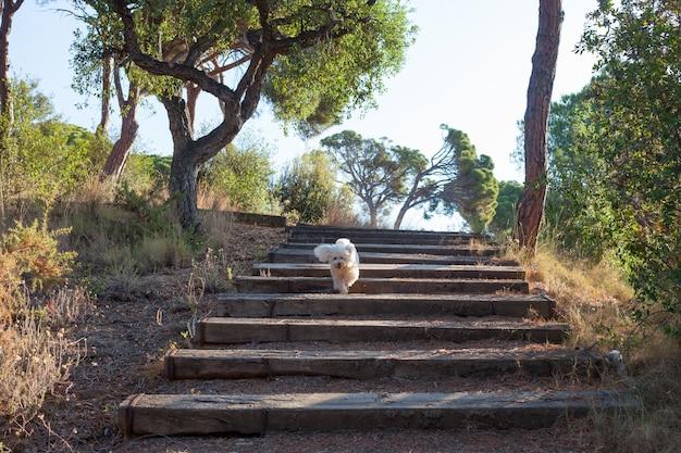 지중해 연안에 있는 공원. 소나무. 작은 개가 걷고 있습니다.