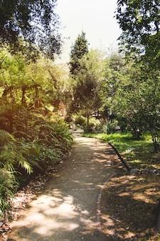 木々と公園の道