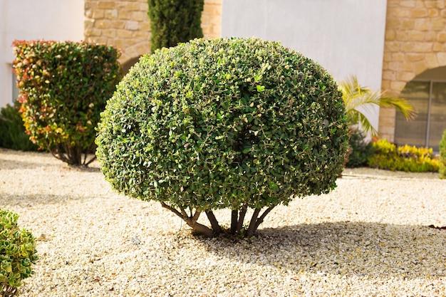 둥근 모양으로 깎인 녹색 관목의 공원 심기.