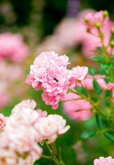 パークローズ-夏には庭でガマが育ちます
