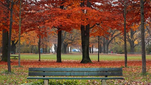 Parco circondato da foglie colorate e alberi con una panca in legno durante l'autunno