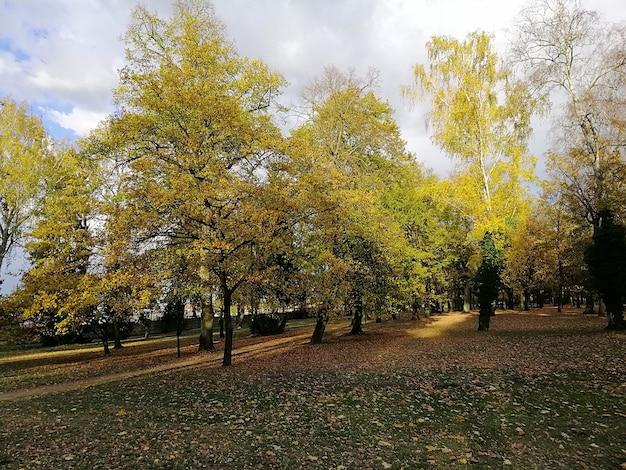 ポーランドの秋の紅葉に覆われた木々に囲まれた公園