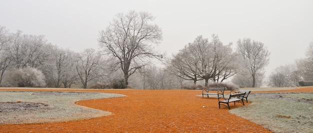 霧の日に裸の木とオレンジ色の地面のある公園
