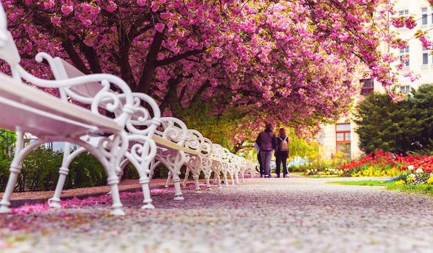 Парк с цветущей сакурой и белыми скамейками