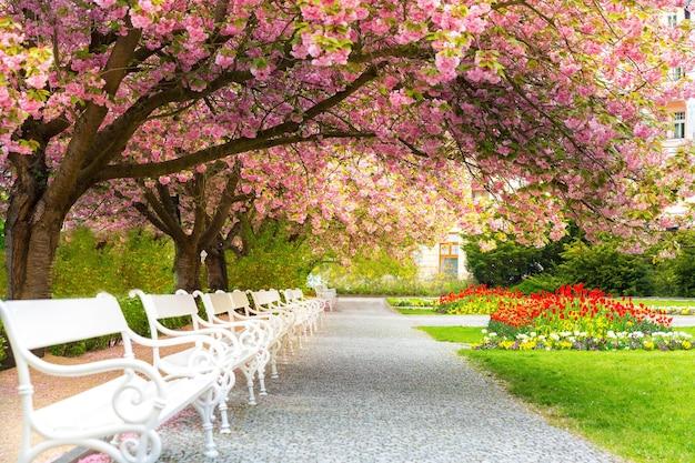 花桜、花の芝生、ベンチのある公園