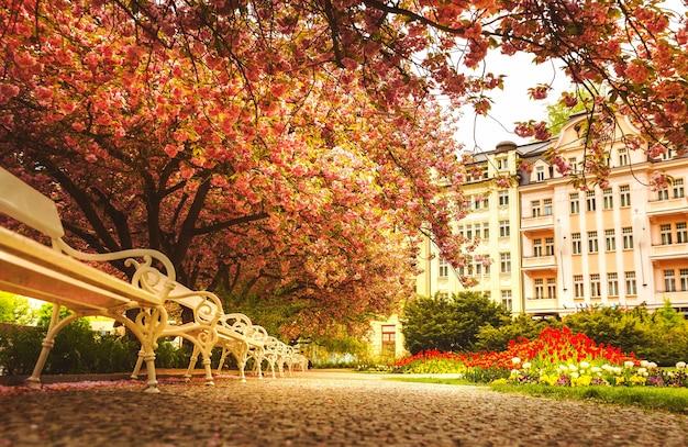 Парк с цветущей сакурой, цветочной лужайкой и белыми скамейками.