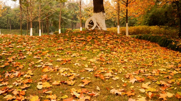 Park with dry leaves on the ground