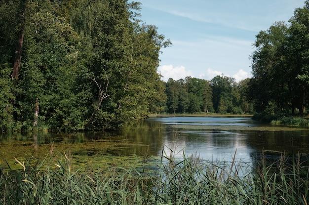 Parco con laghetto nel bosco, estate settentrionale, vista lago con canneti e ninfee. fotografia di paesaggio, giornata di sole