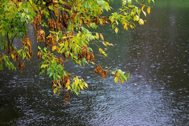 秋の初めの雨天で川の向こうに木々が生い茂る公園