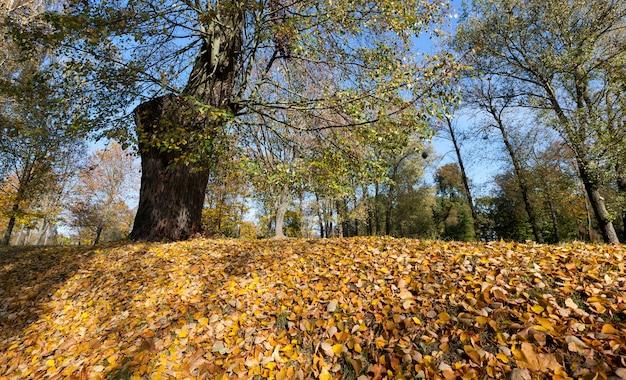 Парк с деревьями