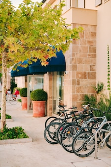 Parked bikes in the parking lot under the yellowed maple