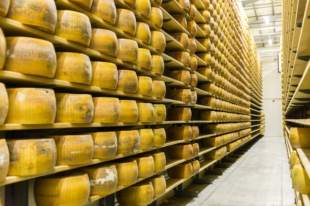 Parmigiano cheese factory production shelves with aging cheese