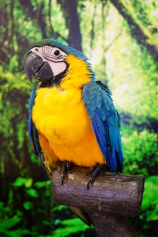 Parrot bird, also called psittacidae