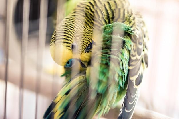 Птица-попугай сидит в клетке и чистит перья