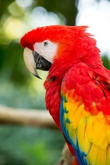 Птица-попугай сидит на жердочке