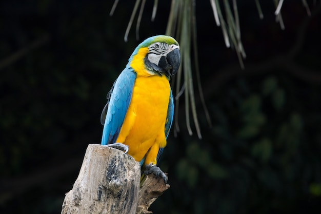 止まり木に座っているオウム鳥