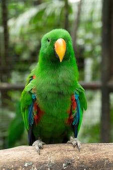 とまり木に座っているオウムの鳥