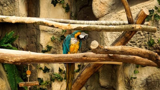 Попугай синий и желтый ара на ветке дерева джунглей