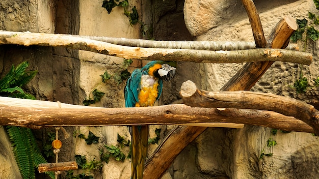 Parrot blue and yellow macaw on a tree branch jungle