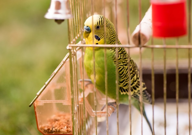 A parrot in a cage sits on a bird feeder and pecks grains