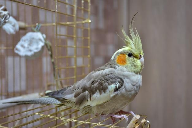 Попугай корелла крупным планом сидит на клетке