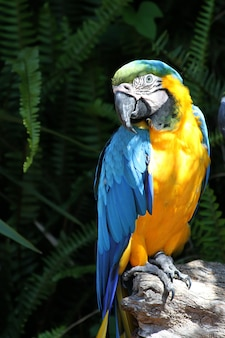 Parrot in greenery