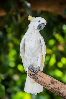 Parrot, lovely bird, animal and pet in the garden