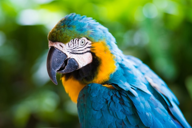 Parrot macaw, closeup on a green background.