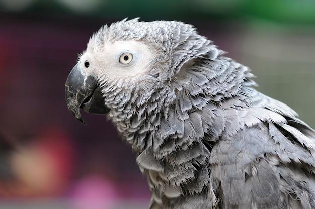 Попугай ара попугаи птица
