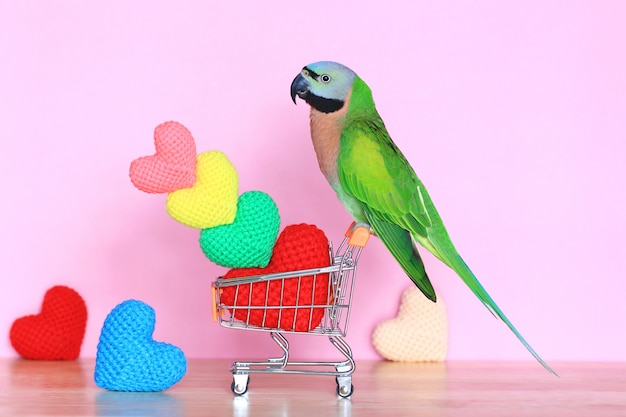 Parrot on model miniature shopping cart and colorful of handmade crochet heart for valentines day