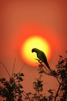 自然と夕日のオウム