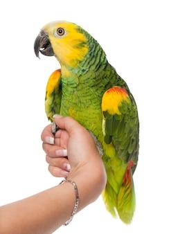 Попугай сидел на руке