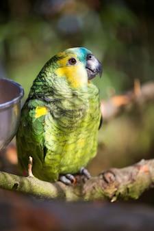 鳥のオウムの肖像画。熱帯の自然からの野生生物のシーン。