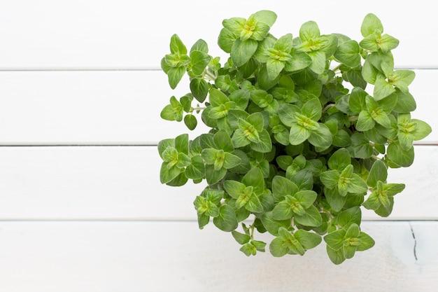 Трава петрушки, базилик, шалфей, листья, тимьян, специи мяты.